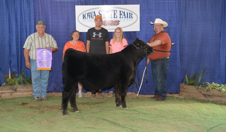 2016 Iowa State Fair Bull Calf Champion- Foundation Show – Felt Farms